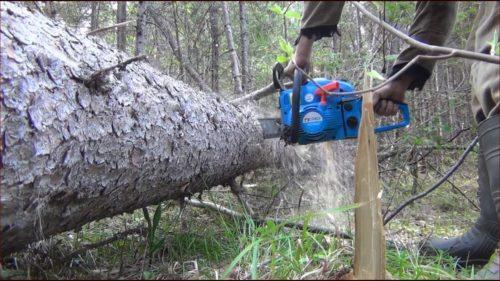 Перепиливание ствола упавшего дерева