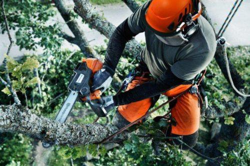 Как нужно пилить деревья бензопилами