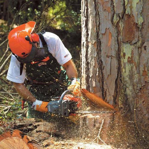 Процесс пиления дерева бензопилой