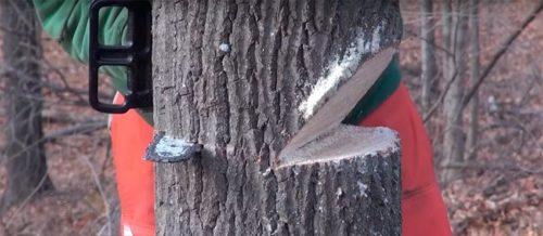 Выпиливание клина на дереве
