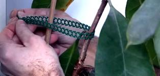 Соединение стяжкой веток растений