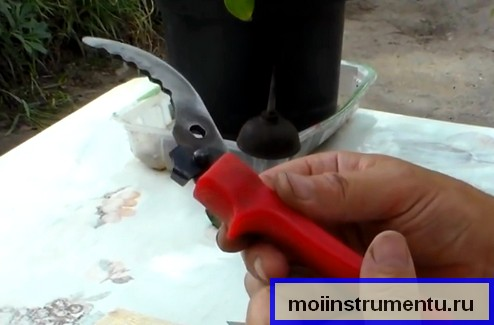 Как наточить секатор дома